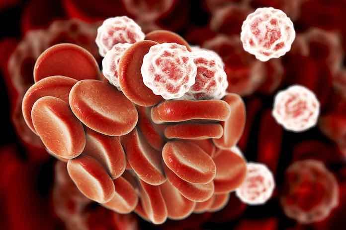 biele krvinky